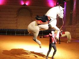 Spectacle_Equestre_179.jpg